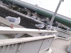 阪堺電車 大和川付近の鳥
